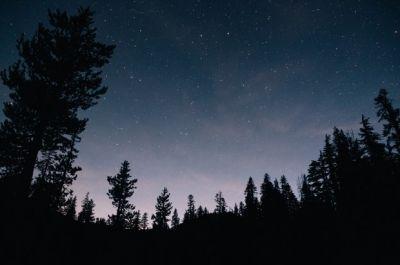 foret-nuit.jpg